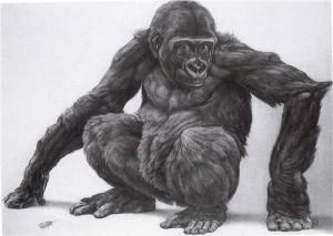 Gorilla Japie, Jaap Kaas